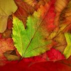 'Falling Autumn Leaves' - Realistically Moving Motion Background Loop_SampleStill