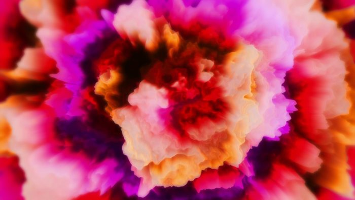 'Carnation' - Blossom-like Motion Background Loop_SampleStill
