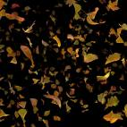 'Autumn Fall Leaves Frontal - Black BG' - Realistic Fallling Foliage Motion Background Loop-SampleStill