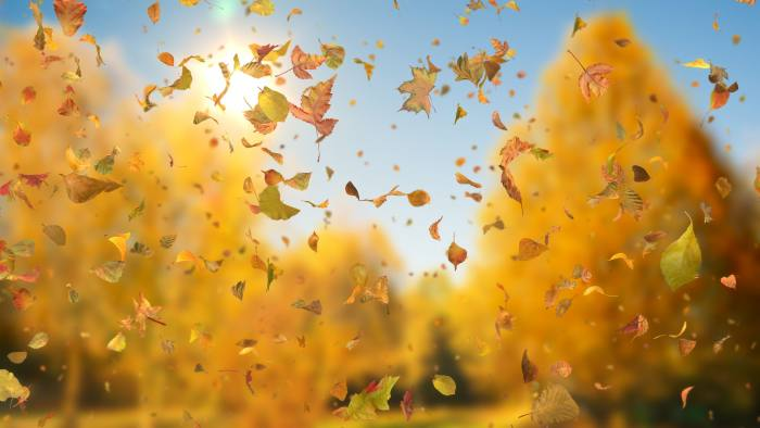 'Autumn Fall Leaves Sideways' - Realistic Falling Leaves Motion Background Loop-SampleStill