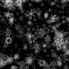 'Pretty Snow 4' - Black BG Winter Motion Background Loop-SampleStill